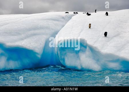 Iceberg with penguins Albino Penguin on an iceberg in Antarctica Antarctica - Stock Photo