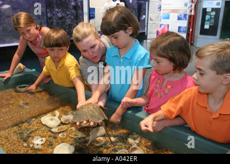 Alabama Dauphin Island The Estuarium Public Aquarium Hands