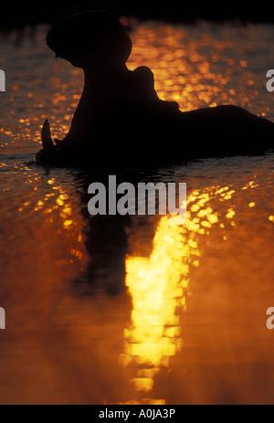 Botswana Moremi Game Reserve Hippopotamus Hippopotamus amphibius yawning in silhouette in pool at sunset - Stock Photo