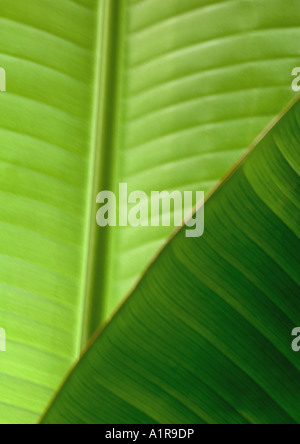 Palm leafs, close-up - Stock Photo