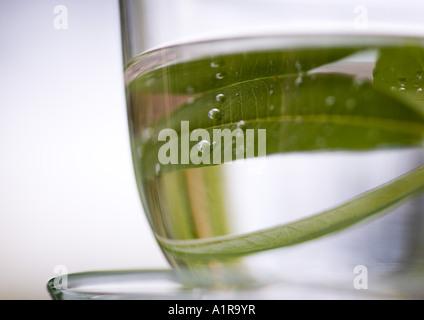 Verbena leaves in cup of water - Stockfoto