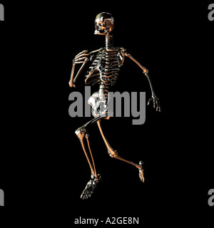Skeleton Running - Stock Photo