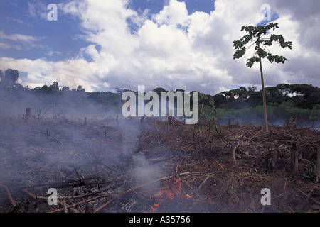 Land clearing in amazon rainforest