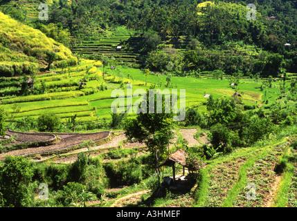 Lush green mountainside rice terraces in the Tirtagganga area East Bali Indonesia - Stock Photo