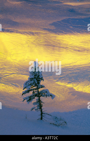 Tree and Ice on Pond at Sunset - Stock Photo