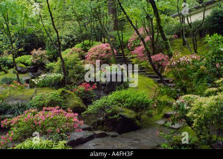 Azalea Bloom Portland Japanese Garden Washington Park Portland Stock Photo 89901657 Alamy
