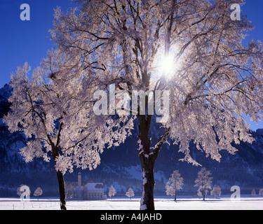 DE - Bayern: Winter am St. Coloman in der Nähe von Schwangau - Stockfoto