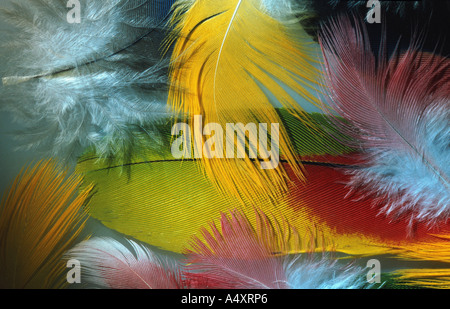 parrot, feathers, arranged - Stock Photo