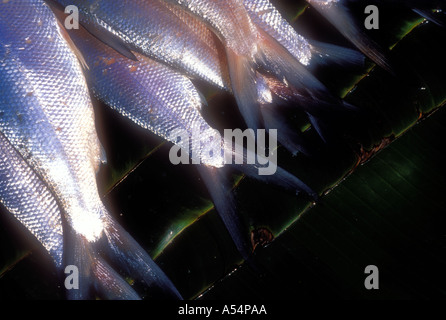 Dead fish at seafood market in Java Indonesia - Stock Photo