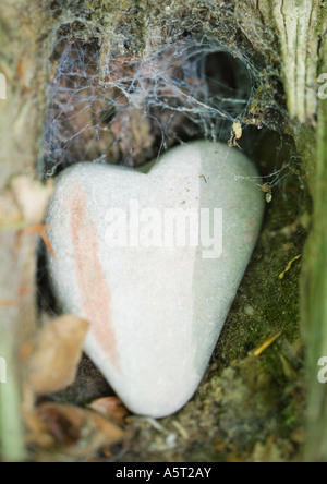 Heart shaped stone in webcovered nook - Stock Photo
