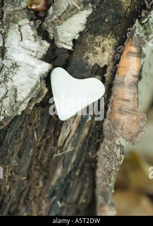 Heart shaped stone on bark - Stock Photo