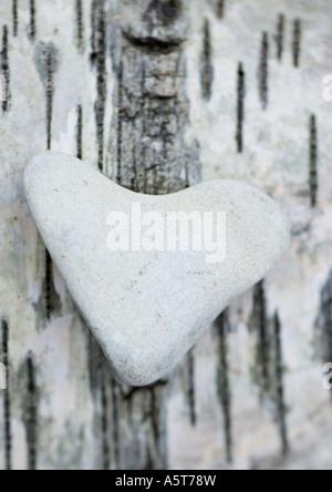 Heart-shaped stone on bark - Stock Photo