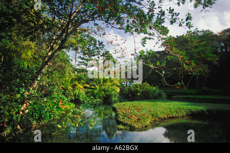 Frenchman's Cove near Port Antonio in Jamaica - Stock Photo