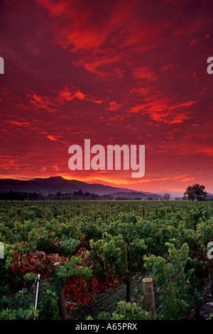 Stormy red dawn sunrise over vineyards near Yountville Napa Valley Napa County California - Stockfoto