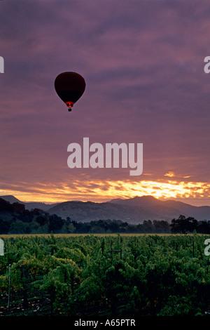 Hot air balloon over vineyards at sunrise near Yountville Napa Valley Napa County California - Stockfoto