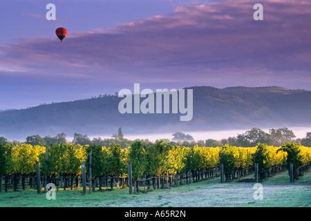 Hot air balloon and clouds at sunrise over vineyards near Oakville Napa Valley Napa County California - Stockfoto