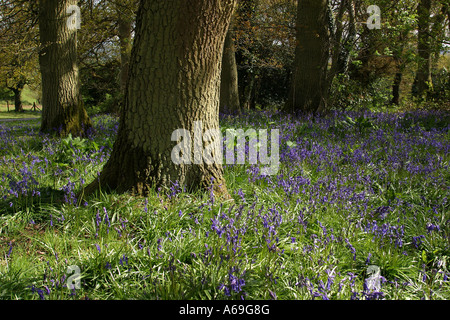 Colourful flowers growing in hiking boots field british for Gwent garden designs ltd