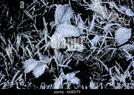Frosty leaves against a black background - Stock Photo