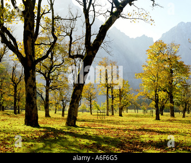 AT - TYROL:  Grosser Ahornboden in the Eng - Stock Photo