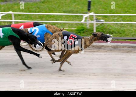 Sarasota Dog Kennel Racing