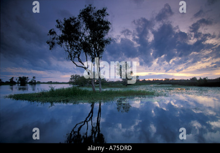 Yellow Waters at Dawn Kadadu National Park Northern Territories Australia - Stock Photo