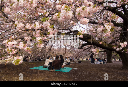 People having a picnic under cherry blossom trees in Tokyo Japan - Stock Photo