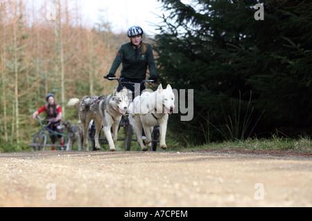 Dog Training Dumfries Galloway