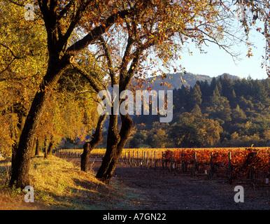 USA, California, Napa Valley, Calistoga. Morning sun skims over the valley floor and its oaks and vineyards. - Stockfoto