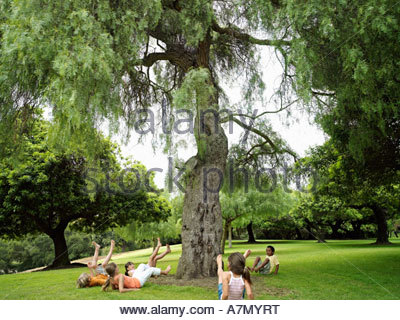Group of children 7 9 playing ring a ring o roses in park falling down beside tree - Stock Photo