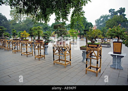 CHINA BEIJING Display of ancient Bonsai trees in the center of Jingshan Park - Stock Photo