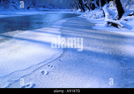 Animal tracks in the snow on the Salt Fork of the Vermilion River Illinois - Stock Photo
