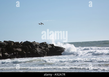 Seagulls Flying above Surf - Stock Photo