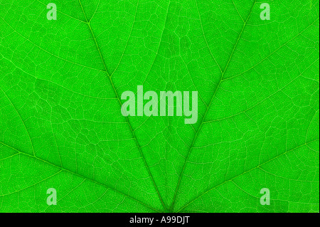 Detailed Macro shot of a Green leaf - Stock Photo