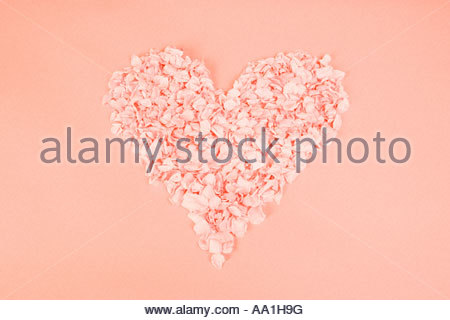 Heart shape of petals - Stock Photo