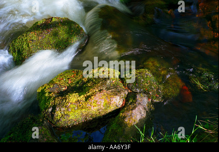 Moss covered rocks with water flowing past in scotland - Stockfoto