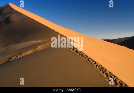 Tracks along a ridge of dune rising above the desert Namibia - Stockfoto