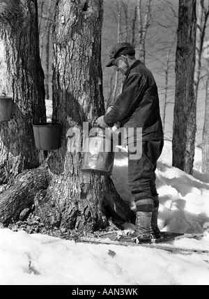 1930s 1940s MAN TAPPING MAPLE SUGAR TREES IN MAINE - Stock Photo