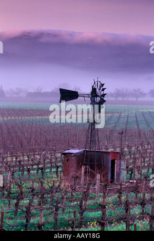 Old Windmill in Napa Valley Vineyards in winter with fog rolling over coastal hills vertical - Stockfoto