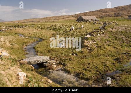 UK Scotland Western Isles Outer Hebrides Berneray sheep on crofting land - Stock Photo