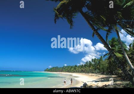 Surfline Palm Beach