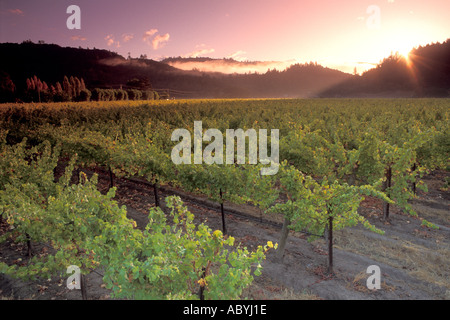 Sunrise over Vineyard in the Napa Valley along the Silverado Trail California  - Stockfoto