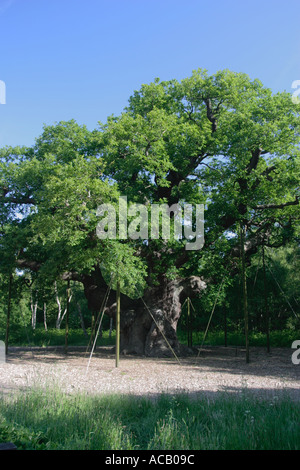 The Major Oak, Sherwood Forest, Nottinghamshire.  This is believed to be Robin Hood's base within Sherwood Forest. - Stock Photo