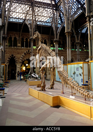 Animal Skeleton Oxford University Museum Of Natural