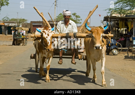 Horizontal close up of an Indian farmer with his painted Sahiwal cattle pulling his cart - Stock Photo