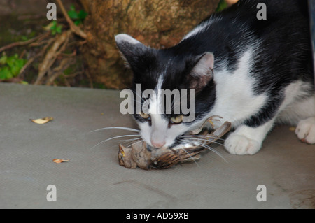 Cat With Bird In Mouth 77