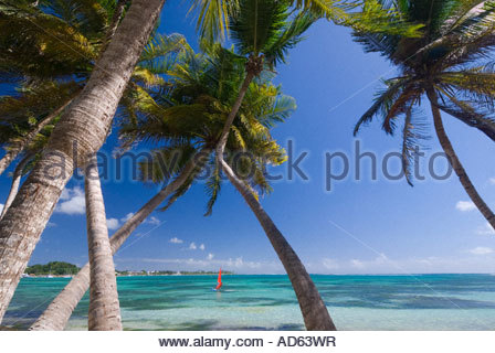 Palm trees and windsurfer at La Plage de la Caravelle, Grande Terre, Guadeloupe - Stock Photo