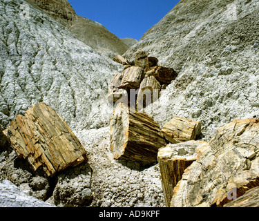 USA - ARIZONA: Petrified logs at Blue Mesa in Petrified Forest National Park - Stock Photo