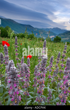 wild flowers growing in a field with Preci and the mountains of Monti Sibillini National Park beyond Umbria Italy - Stock Photo
