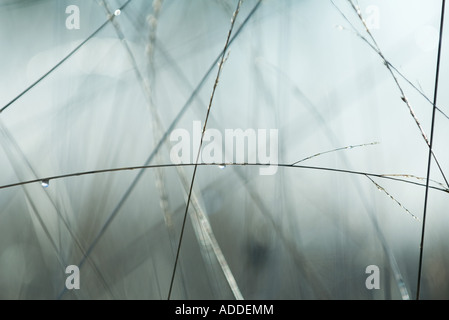 Wet vegetation and mist, close-up - Stock Photo
