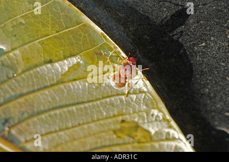 stranded insect - Stockfoto